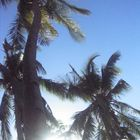 The Sun under the Coconuts