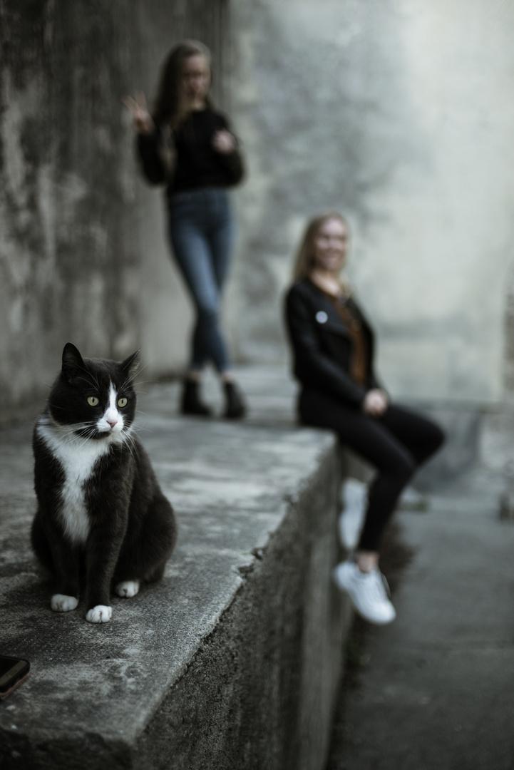 the superstar cat