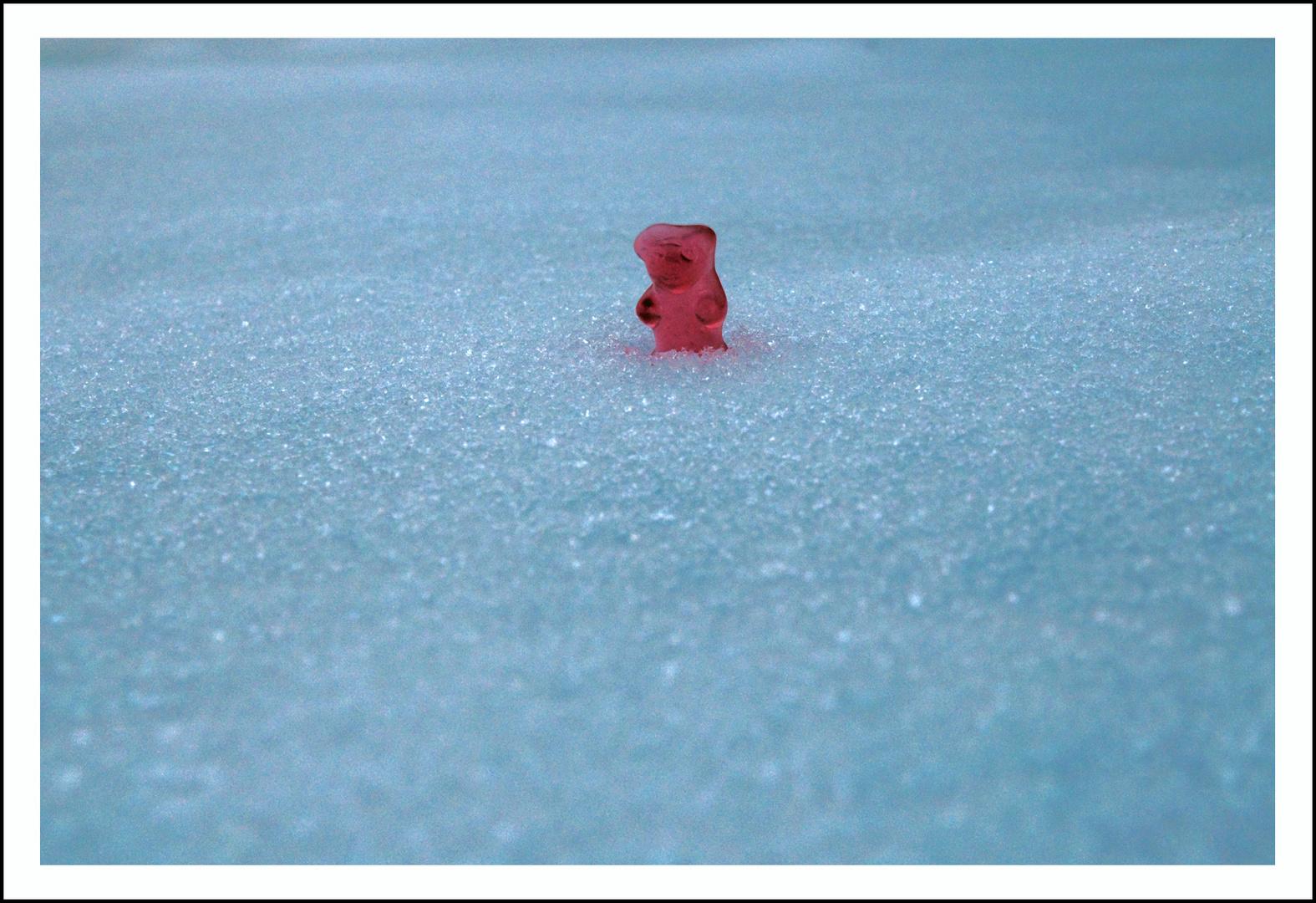 The survival of the polar bear!