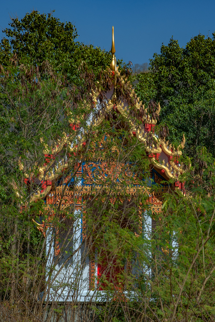 The temple in the undergrowth