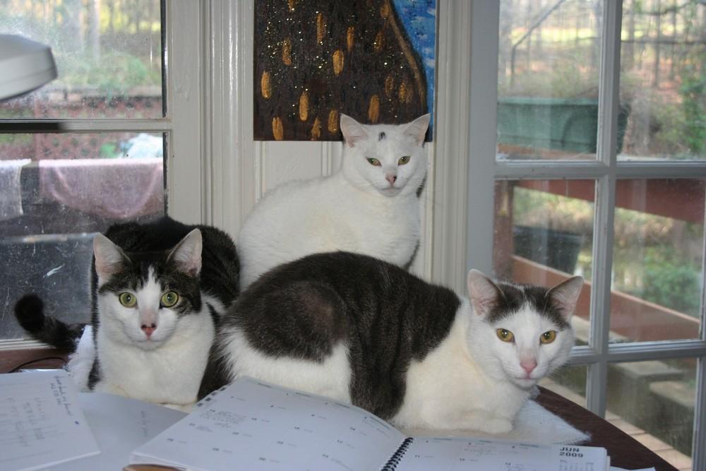 The Three Amigo's