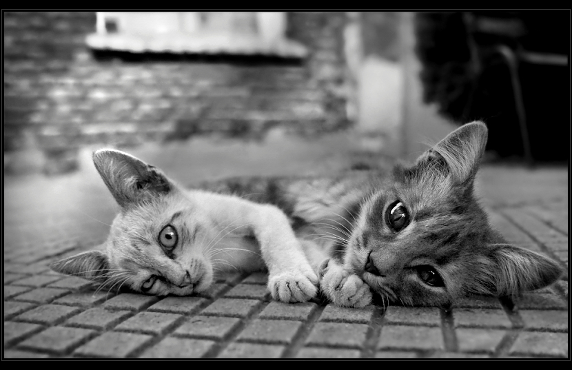 .. The Total Spring Fatigue ..