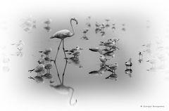 """The totem """"dell'acqua e dell'aria # 05"""""""