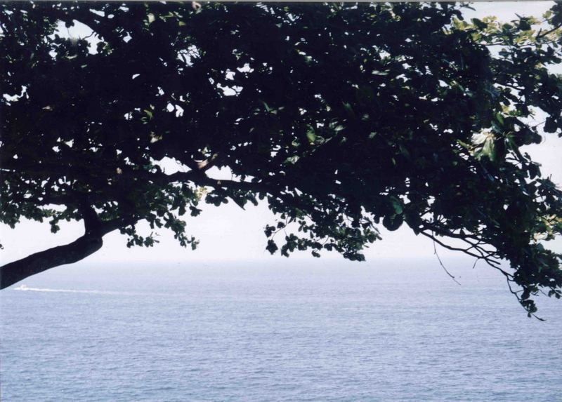 The Tree and The Sea