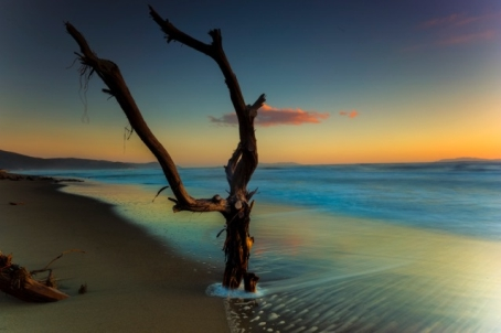 ...the tree in the sea...