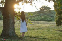 the tree   the girl   the sun
