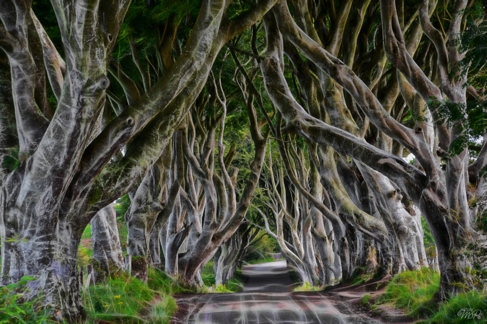 The (very) Dark Hedges (in colours) ...