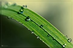 The Water Drop