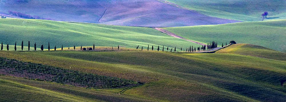 the way of the cypresses
