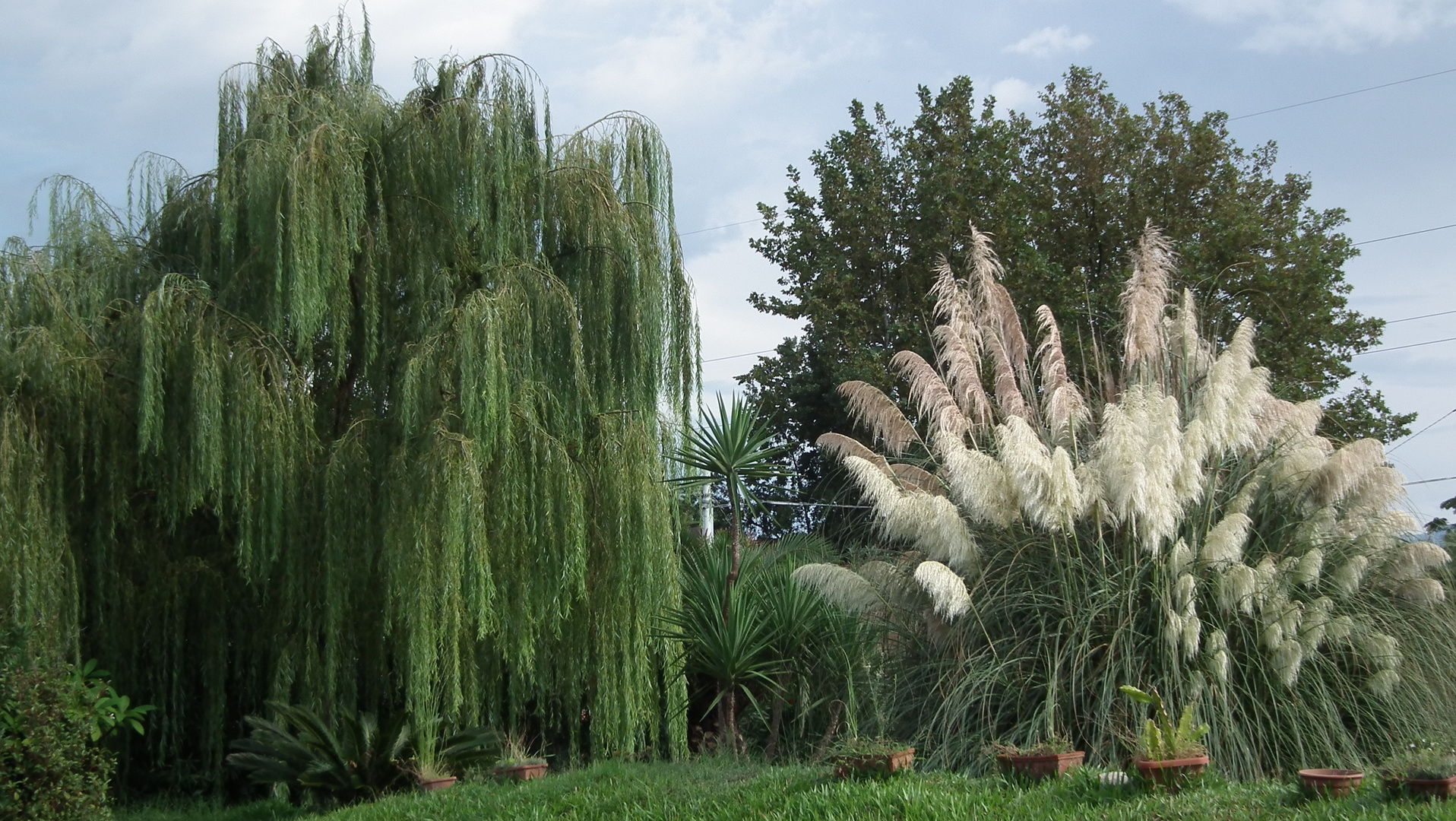 The weeping willow and the papyrus