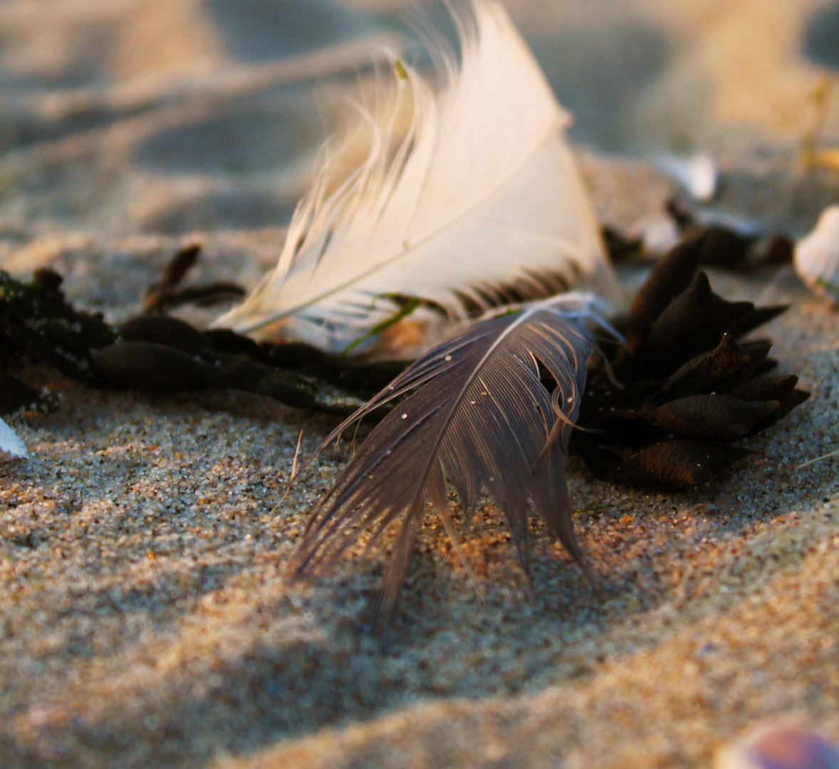 ....the White and Grey Feather...