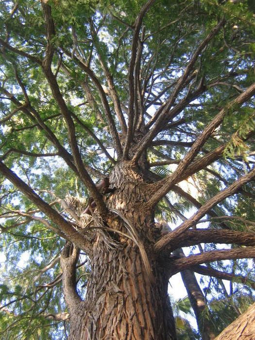 The Wishibg Tree