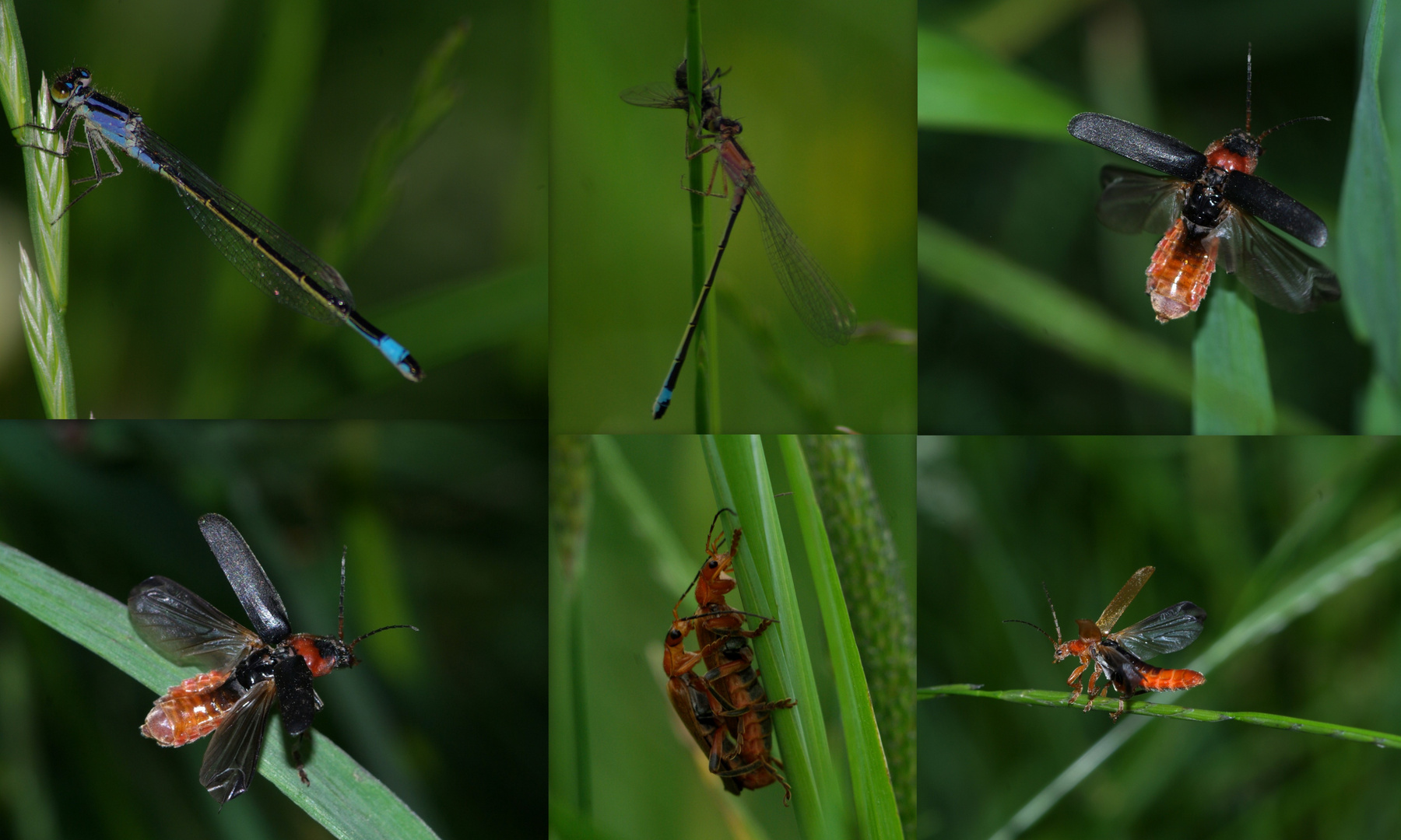 The Wonderful world of insects ! part 2