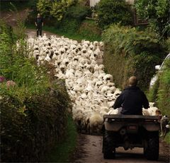 The Year Of The Working Sheep Dog