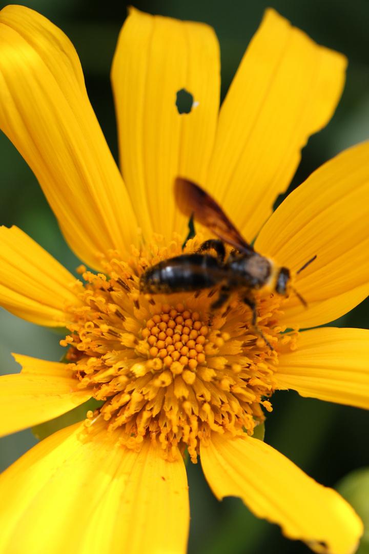 The Yellow n Bee