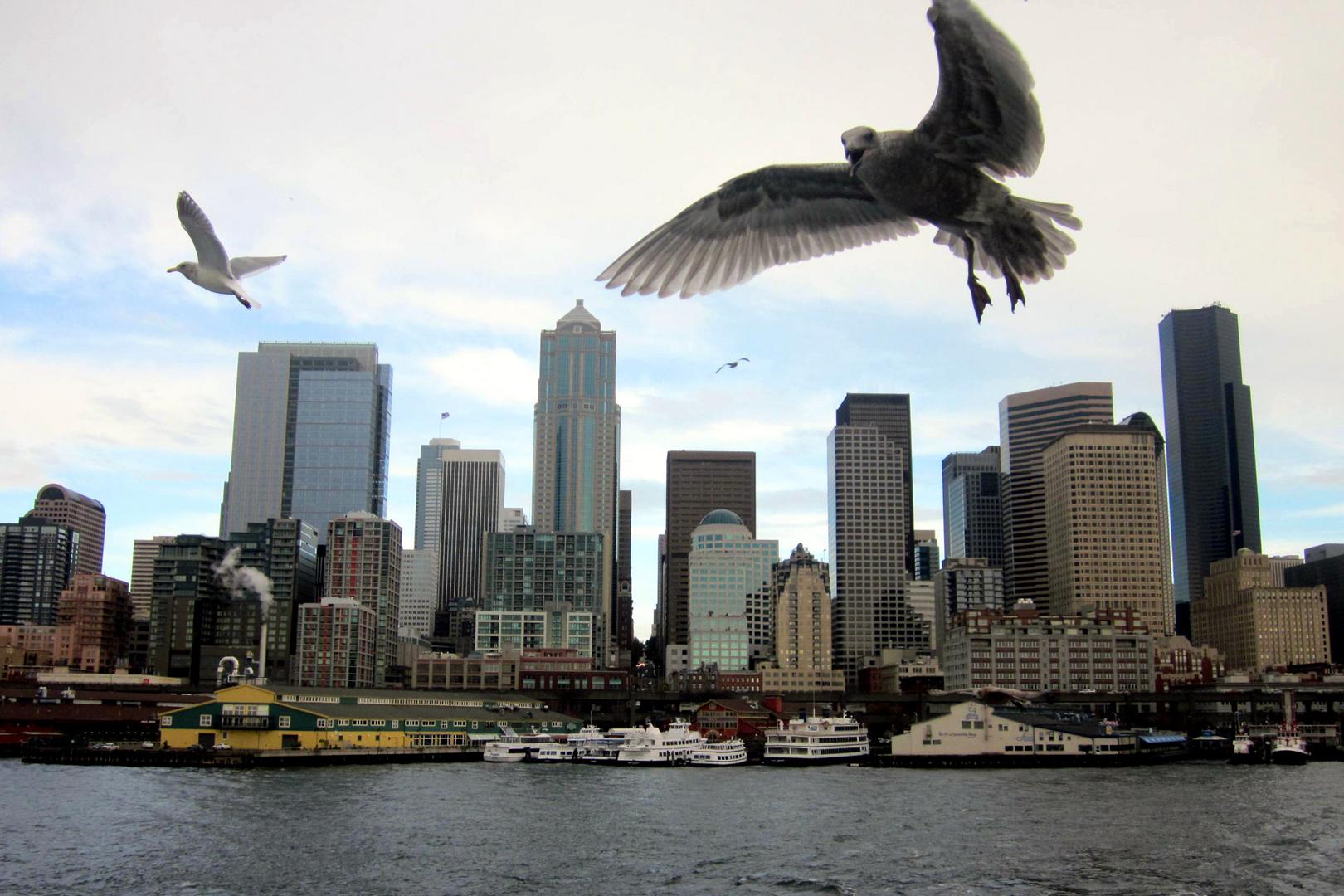 TheGull_Seattle