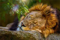 /// the.lion.sleeps.tonight ///