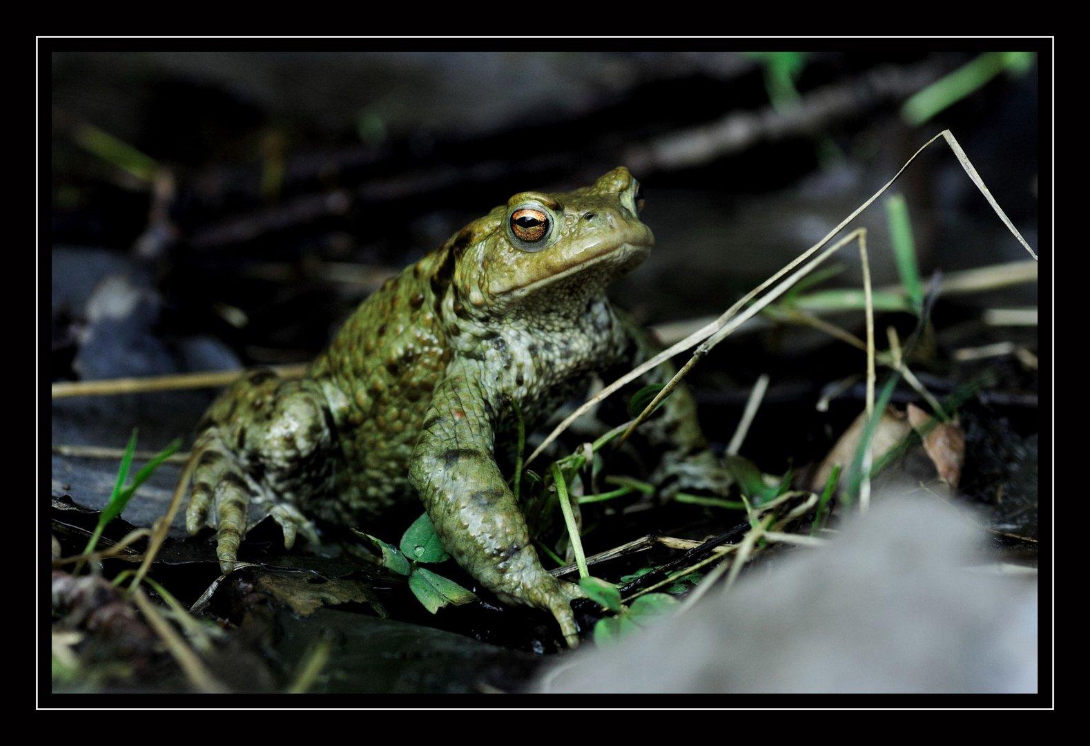 Theo der Frosch
