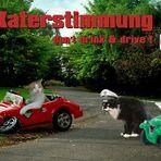 Theos und Yoshis Abenteuer ... im Straßenverkehr