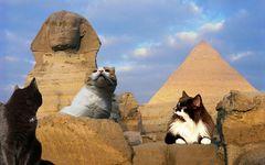 Theos und Yoshis Abenteuer in ... Ägypten