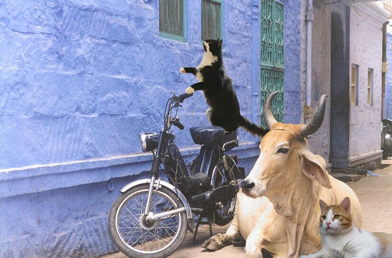 Theos und Yoshis Abenteuer ... in Indien