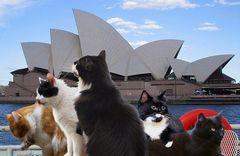 Theos und Yoshis Abenteuer in...Sydney