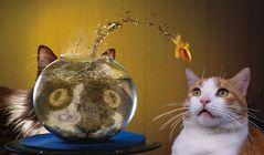 Theos und Yoshis Abenteuer ... mit einem Fisch
