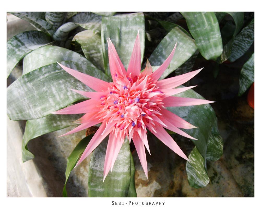 Thepurple Flower