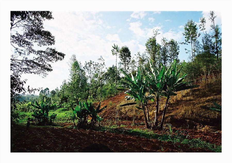 Thika-District Kenya