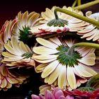 Thinking flowers