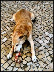 This bone is mine. Questa ossa è  tutta mia.
