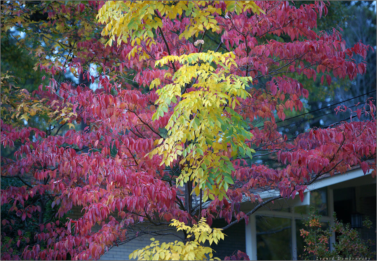 This color November