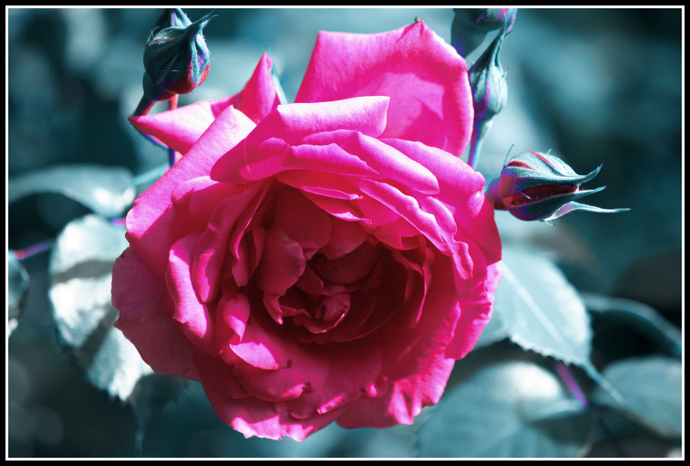 This is a flower for you...