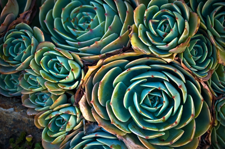 This is not an artichoke