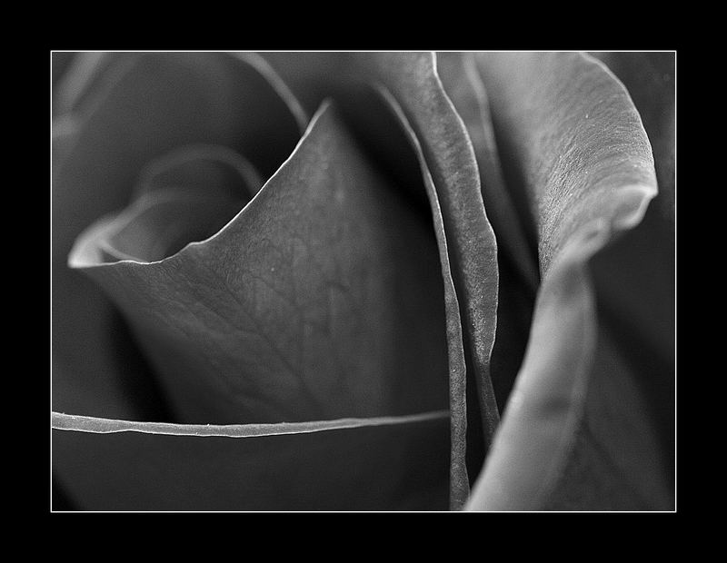 this rose it's for you