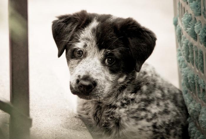 Those sad puppy eyes .