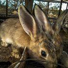 Three bunny ears