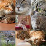 three cat-chess