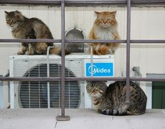 Three Cats Fabric