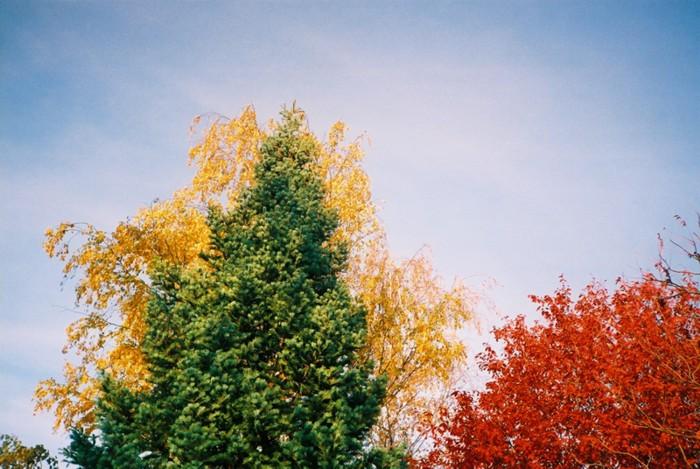 T(h)ree Colours