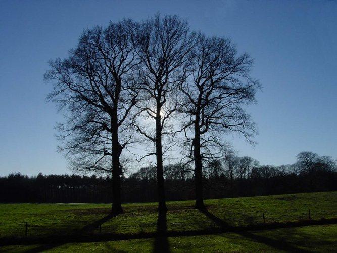 Three trees in autumn