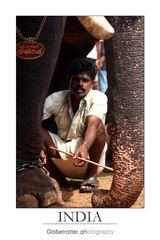 Thrissur Pooram [eight]