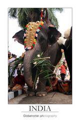 Thrissur Pooram [eleven]