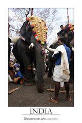 Thrissur Pooram [twelve]