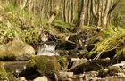 Thüringer Wildnis