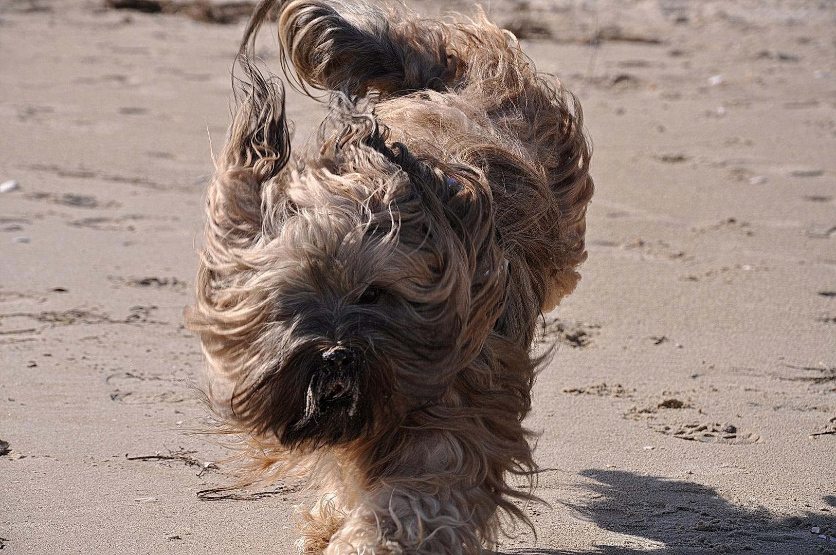 Tibbi am Strand