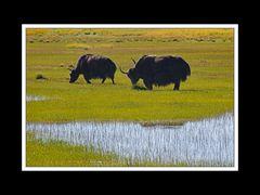 Tibet 2010 048