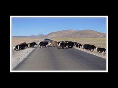 Tibet 2010 056