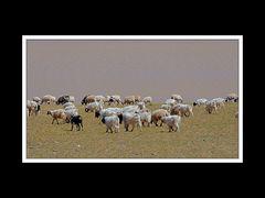 Tibet 2010 100