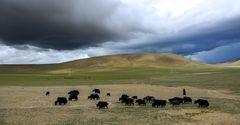 Tibet (81)